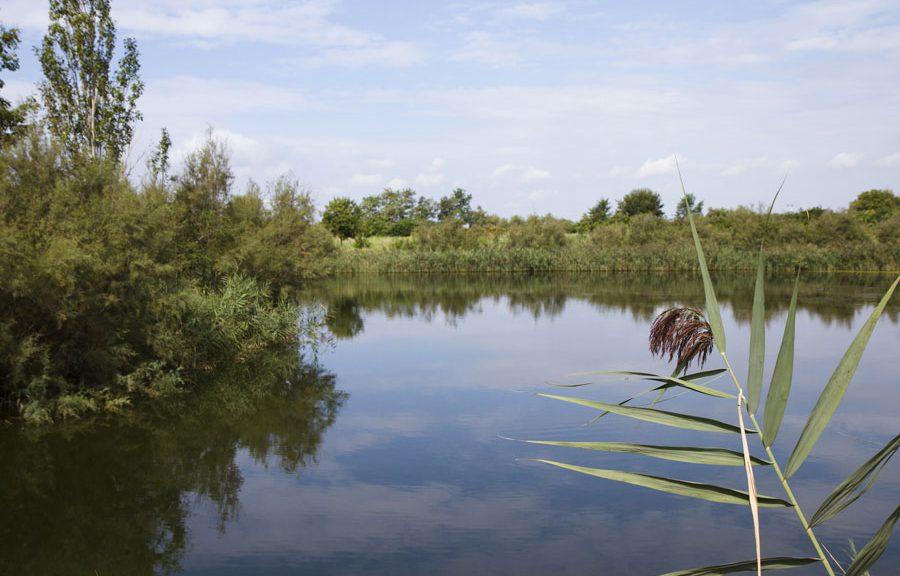 Brussa Caorle oasi